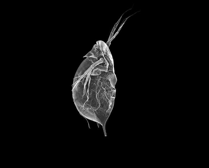 aquaticsetupii-5-von-6