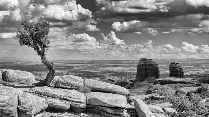 View over Arches National Park